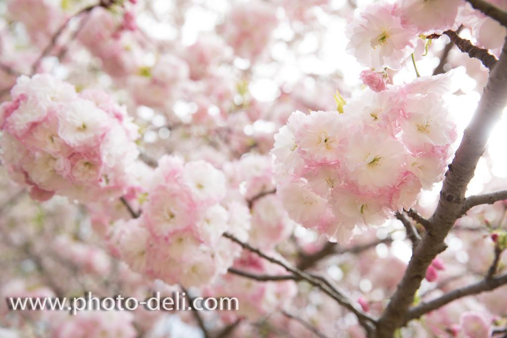 180410PhotoDeli撮影001